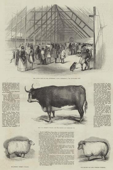 Smithfield Club Prize Cattle Show--Giclee Print