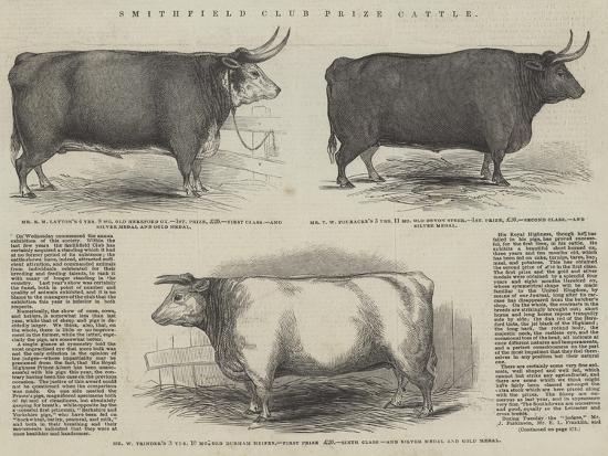 Smithfield Club Prize Cattle--Giclee Print