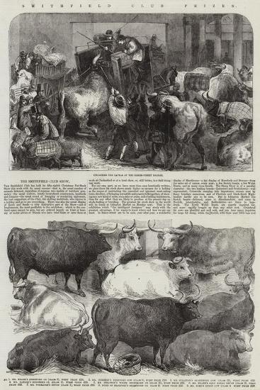Smithfield Club Prizes--Giclee Print