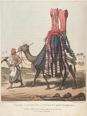 Smithsonian Libraries: Camel Conveying a Bride to her Husband