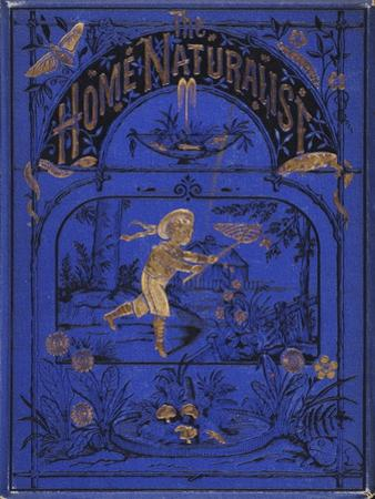 Smithsonian Libraries: Front cover for The Home Naturalist by Harland Coultas