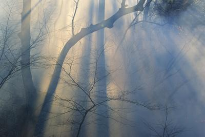 Smoke from Prairie Burn Through Woodland Hollow-Michael Forsberg-Photographic Print