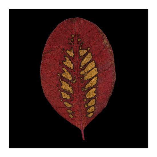 Smokebush Leaf on Black-June Hunter-Art Print