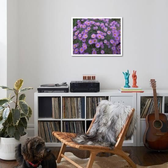 Swell Smooth Aster Plant In Full Summer Bloom Colorado Art Print By Tim Fitzharris Art Com Gmtry Best Dining Table And Chair Ideas Images Gmtryco