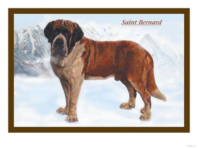 Smooth Coated Saint Bernard--Art Print