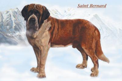 Smooth Coated Saint Bernard
