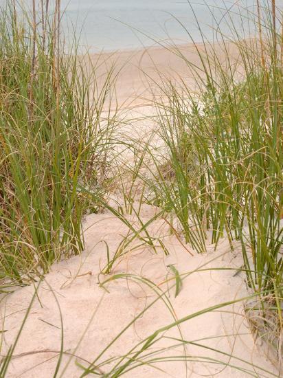 Smyrna Dunes Park, New Smyrna Beach, Florida-Lisa S^ Engelbrecht-Photographic Print