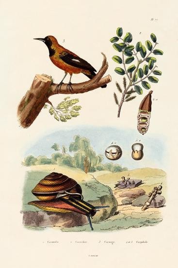 Snail, 1833-39--Giclee Print