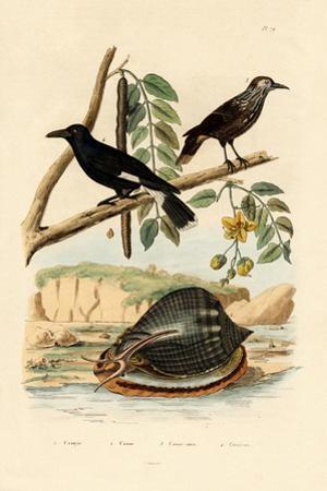 Snail, 1833-39
