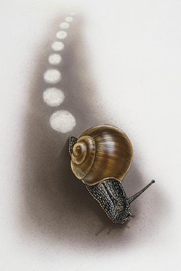 Snail Leaves Trail on Ground, Artwork by Robin Carter--Giclee Print