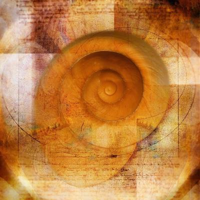 Snail Shell and Handwriting-Colin Anderson-Photographic Print