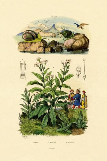Snails, 1833-39--Giclee Print