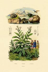 Snails, 1833-39