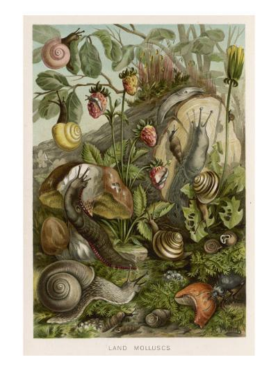 Snails on and around Various Foliage--Giclee Print