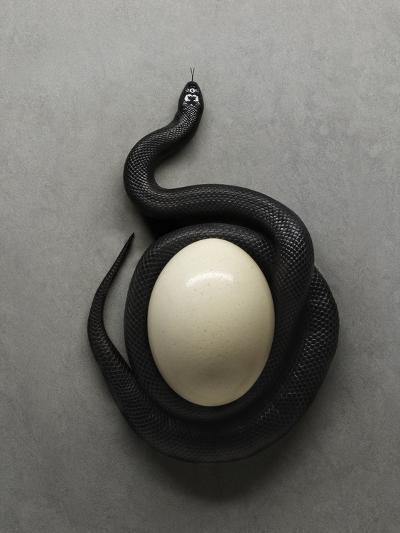 Snake and Egg-Graeme Montgomery-Photographic Print