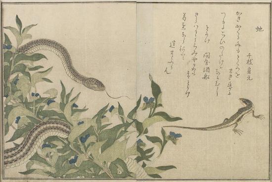 Snake and Lizard, 1788-Kitagawa Utamaro-Giclee Print