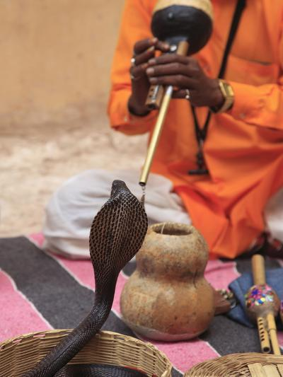 Snake Charmer, Rajasthan, India, Asia--Photographic Print