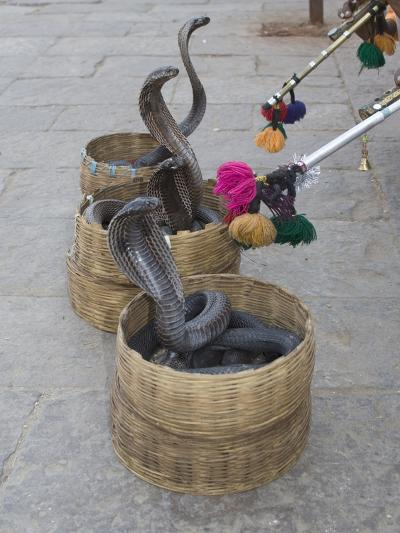 Snake Charmers Baskets Containing Cobras, Jaipur, India-Hal Beral-Photographic Print