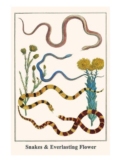 Snakes and Everlasting Flower-Albertus Seba-Art Print