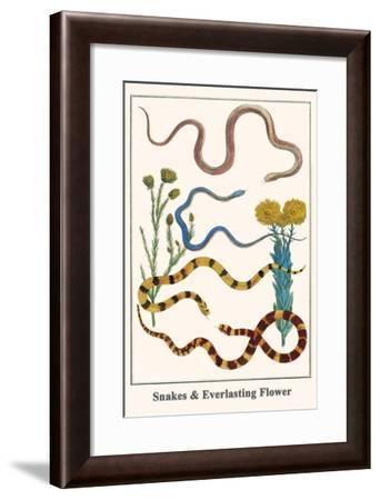 Snakes and Everlasting Flower-Albertus Seba-Framed Art Print