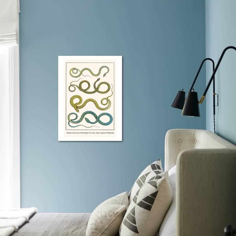 Snakes, from Java, Martinique and Cuba, Asian Lognose Whipsnake Art Print  by Albertus Seba | Art com
