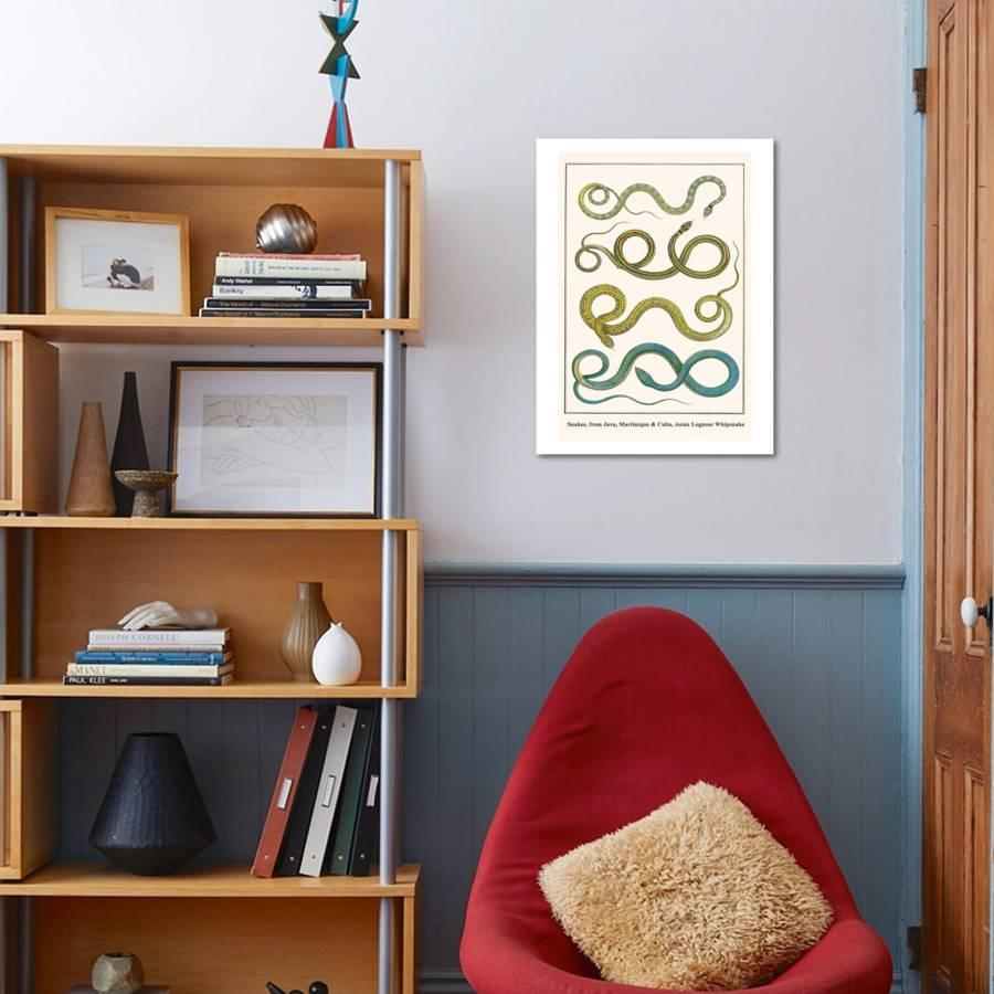 Snakes, from Java, Martinique and Cuba, Asian Lognose Whipsnake Art Print  by Albertus Seba | Art com