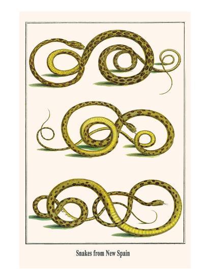 Snakes from New Spain-Albertus Seba-Art Print