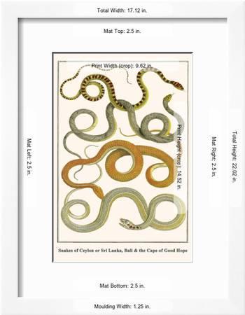 Snakes Of Ceylon Or Sri Lanka Bali And The Cape Of Good Hope Art Print Albertus Seba Art Com