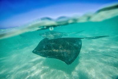 Snap on the Water at Stingray City-Roberto Moiola-Photographic Print