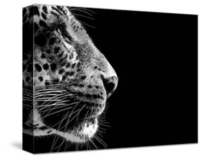 Isolated Leopard Face Card