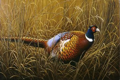 Sneaking Through the Long Grass - Ring Neck Pheasant-Wilhelm Goebel-Giclee Print