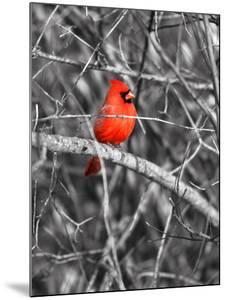 Northern Cardinal Bird on the Branch by SNEHITDESIGN