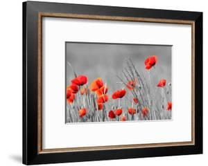 Red Poppy Flowers with Black and White Background by SNEHITDESIGN