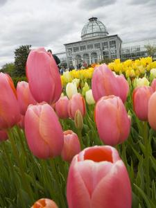 Lewis Ginter Botanical Garden, Richmond, Virginia, United States of America, North America by Snell Michael
