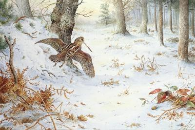 Snipe in Wooded Landscape-Carl Donner-Giclee Print