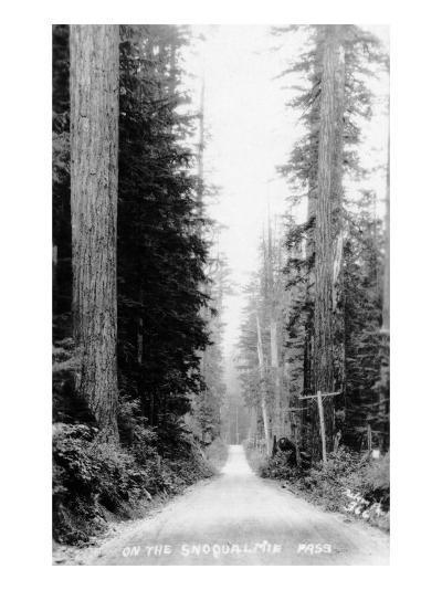 Snoqualmie Pass, Washington, View of a Wooden Dirt Road-Lantern Press-Art Print