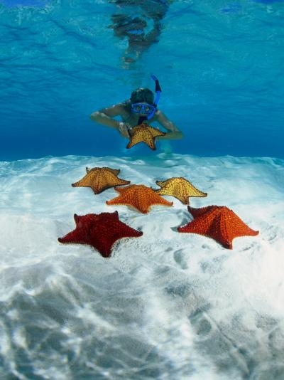 Snorkeller Looking at Cusion Sea Stars Near Marsh Harbour, Marsh Harbour, Bahamas-Michael Lawrence-Photographic Print