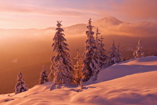 Snovy Trees on Winter Mountains-mr. Smith-Photographic Print