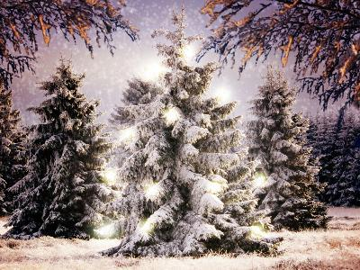 Snow Conifers in Winter Landscape with Christmas Lights--Photographic Print
