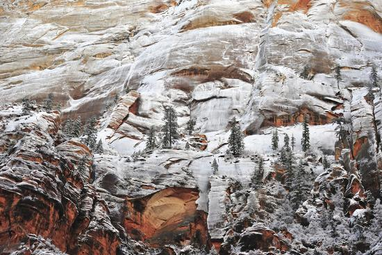 Snow-Covered Evergreen Trees, Cliffs, and Rock Formations in a Desert-Keith Ladzinski-Photographic Print