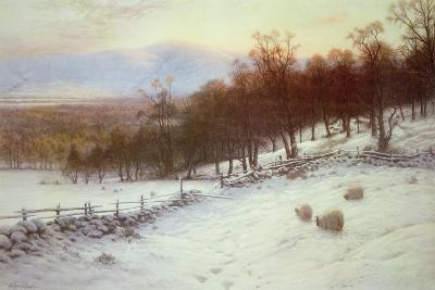 Snow Covered Fields with Sheep-Joseph Farquharson-Giclee Print