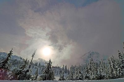 Snow Covered Pine Trees in Mount Baker Volcano Snoqualmie National Forest-Donna O'Meara-Photographic Print