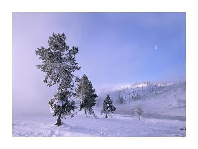 Snow-covered Pines with half moon in Yellowstone National Park, Wyoming-Tim Fitzharris-Art Print