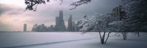 Snow Covered Tree at North Avenue Beach, Chicago, Illinois, USA