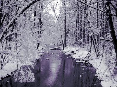 https://imgc.artprintimages.com/img/print/snow-covered-trees-along-creek-in-winter-landscape_u-l-pyyscq0.jpg?p=0