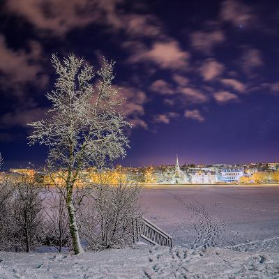 Snow Covered Trees and Frozen Pond, Reykjavik, Iceland--Photographic Print