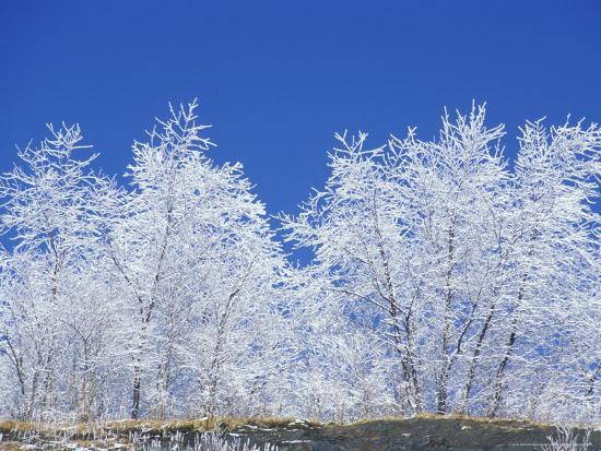 Snow-Covered Trees and Sky, Great Smoky Mountains National Park, Tennessee, USA-Adam Jones-Photographic Print