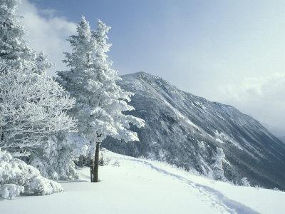 https://imgc.artprintimages.com/img/print/snow-covered-trees-and-snowshoe-tracks-white-mountain-national-forest-new-hampshire-usa_u-l-p3xhyv0.jpg?p=0