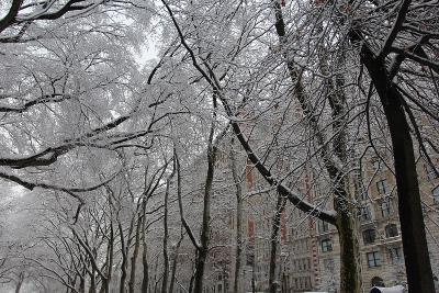 Snow Covered Trees Apartments-Robert Goldwitz-Photographic Print