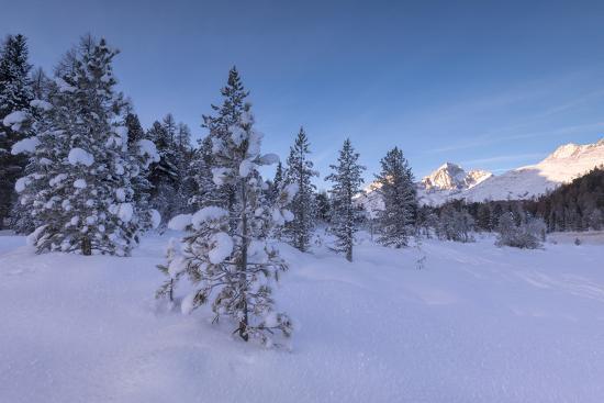 Snow covered trees, Lej da Staz, St. Moritz, Engadine, Canton of Graubunden (Grisons), Switzerland,-Roberto Moiola-Photographic Print